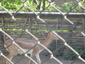 central zoo nepal9.JPG